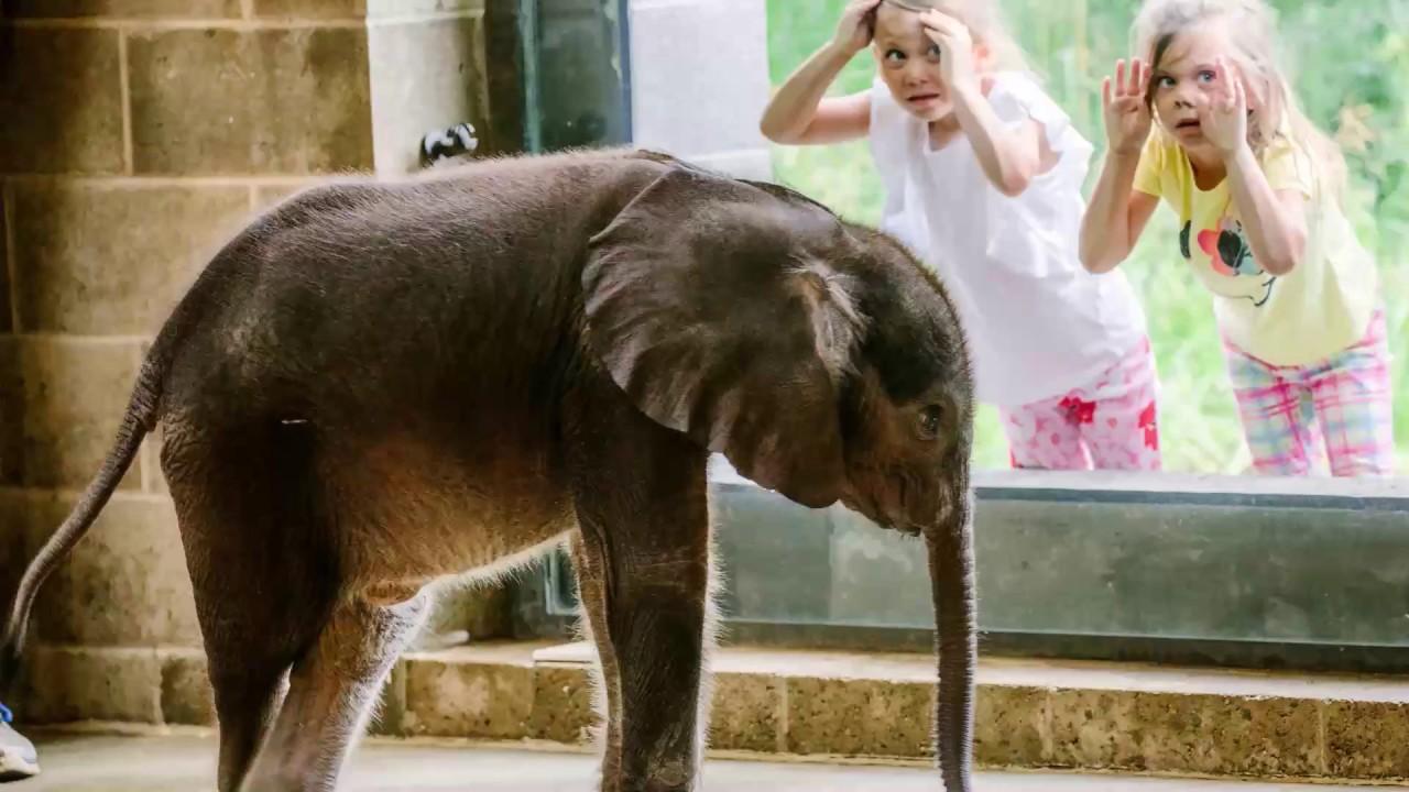 Pittsburgh Zoo's baby elephant dies