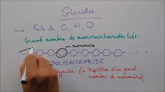 Molécules du vivant 2 - Les glucides