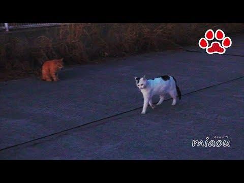 Canon eosr test 【瀬戸の野良猫日記】
