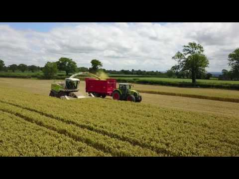 Stevens Contracting Whole Crop 2017