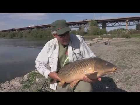 Hamilton Carp - The Fish Finders Season 2 Episode 2 Teaser