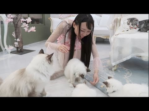 Eat With Cats! Cat Cafe in China!