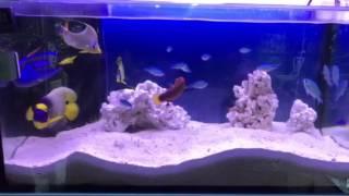 海水魚 thumbnail