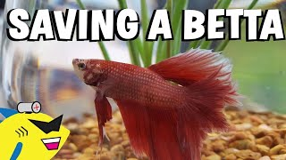 SAVING A BETTA FISH!  Proper Betta Tank Setup