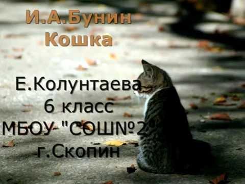 Изображение предпросмотра прочтения – ЕленаКолунтаева читает произведение «Кошка» И.А.Бунина