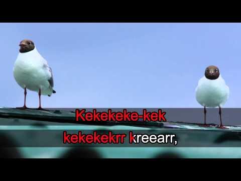 Lintukaraoke: Naurulokki