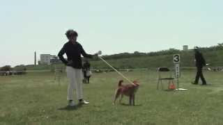 平成26年5月4日に開催された公益社団法人日本犬保存会関東連合展覧...