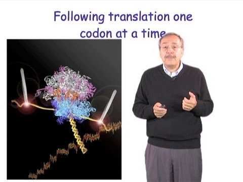 Carlos Bustamante: Single Molecule Manipulation in Biochemistry