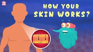 How Your Skin Works? - The Dr. Binocs Show | Best Learning Videos For Kids | Peekaboo Kidz