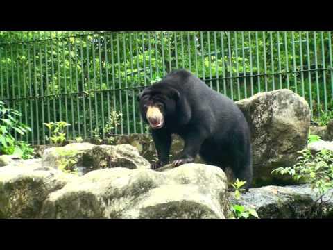 Thailand - Dusit Zoo, Bangkok