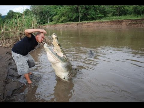 Hand Feeding the Largest Crocodile in Central America (Croc Man Tour, Costa Rica)