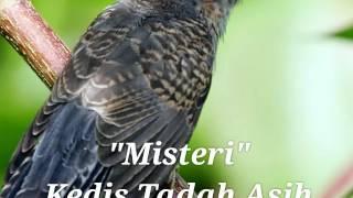 Misteri Burung Kedasih Si Tadah Asih