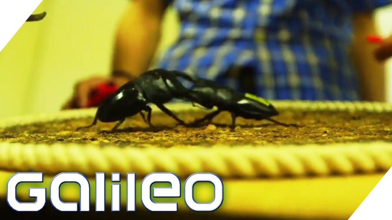 Käfer-Hype in Tokio | Galileo | ProSieben