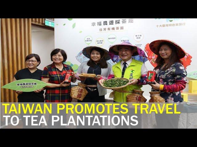 Taiwan designs travel routes to visit Taiwan tea plantations   Taiwan News   RTI