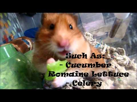 how to keep hamsters cool
