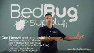 Will freezing winter temperatures kill bed bugs?