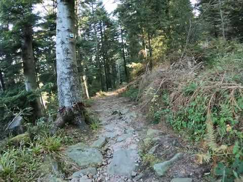 GoPro Hero 7 Black - Trailrunning Footage. Short Downhill running in the Black Forest