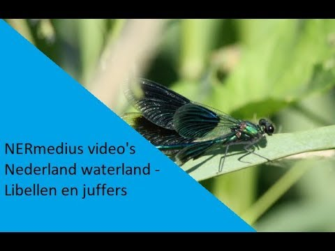 Nederland waterland - Libellen / A land of water; the Netherlands - Dragonflies