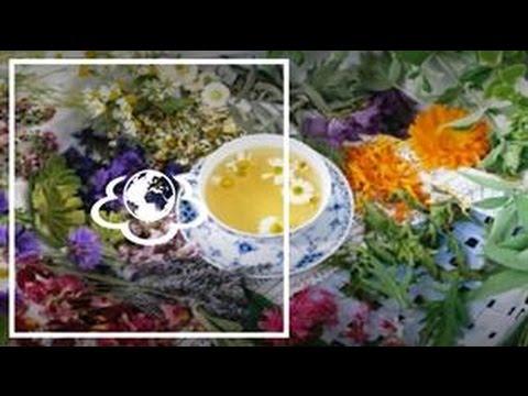 Клевер луговой – описание, свойства, применение корня