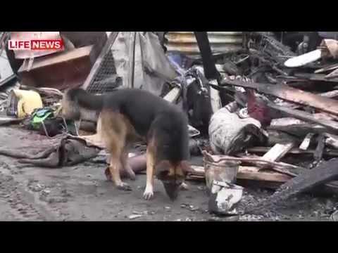 Собака потеряла четверых щенков на пожаре