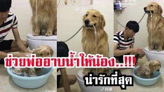 น้องหมาช่วยคุณพ่ออาบน้ำให้น้อง น่ารักไปอีก