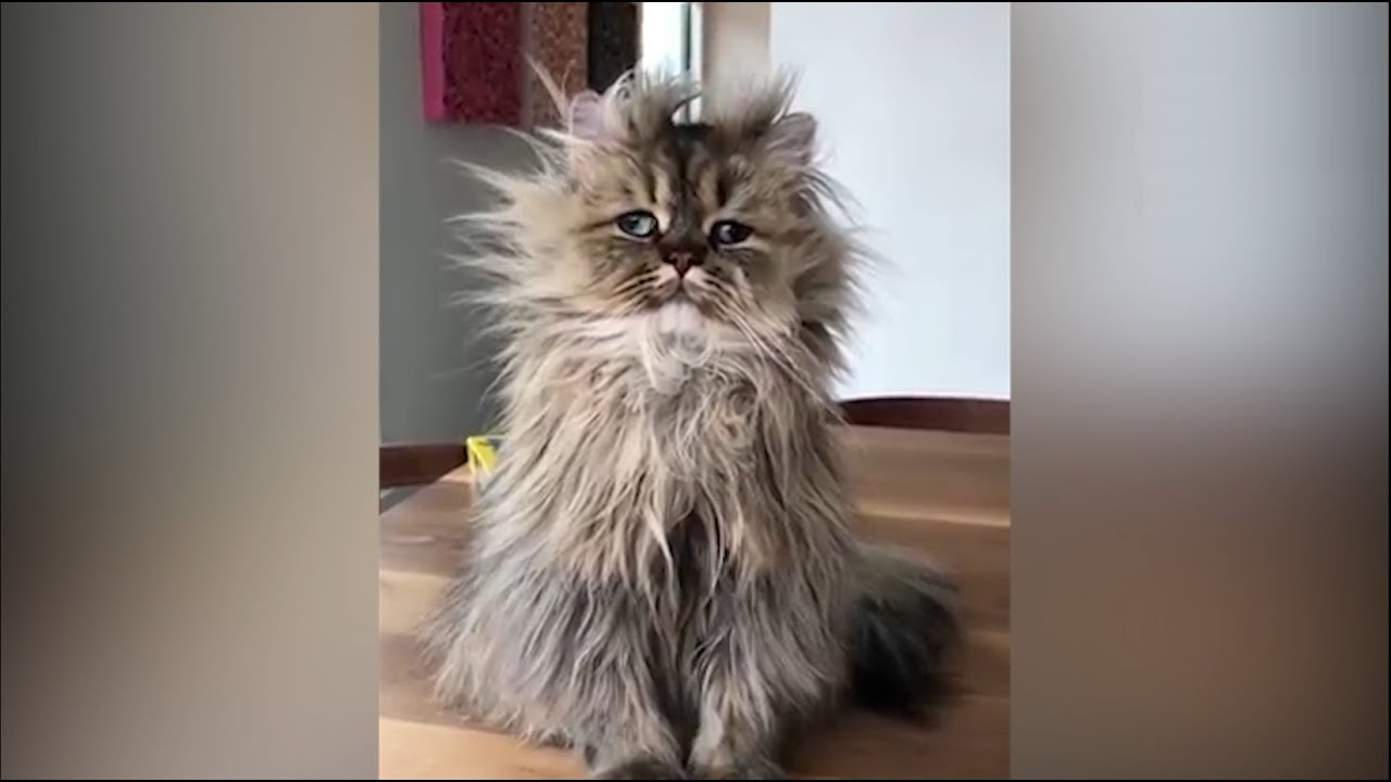 FUNNY CAT VIDEOS - VERY FUNNY CATS - YouTube