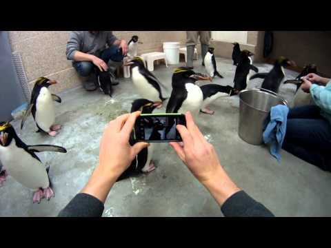 Feeding Penguins @ The Detroit Zoo Penguin Conservation Center