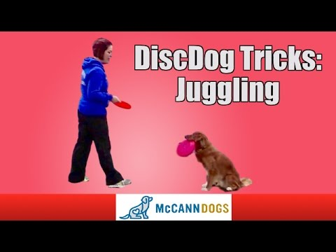 Disc Dog Tricks: Teach Your Dog To Juggle