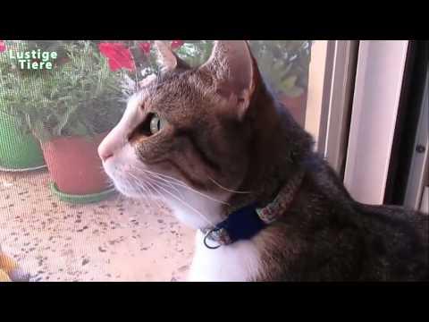 Lustige und nette Tiere Lange Zusammenstellung Juni 2015 [Full HD 1080p VIDEO]