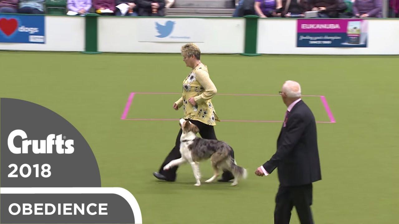 Obedience - Bitch Championship - Part 14   Crufts 2018