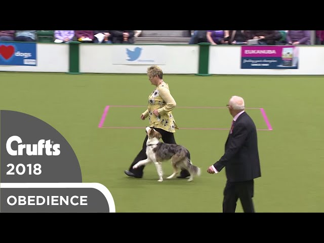 Obedience - Bitch Championship - Part 14 | Crufts 2018