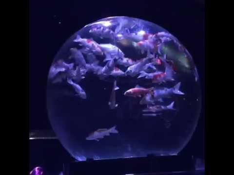 Eco Edo Nihonbashi Art Aquarium 2014, Révolution de globe d'eau