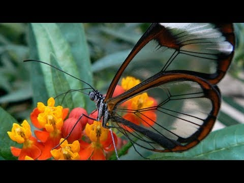 Top 10 Beautiful Butterflies In The World