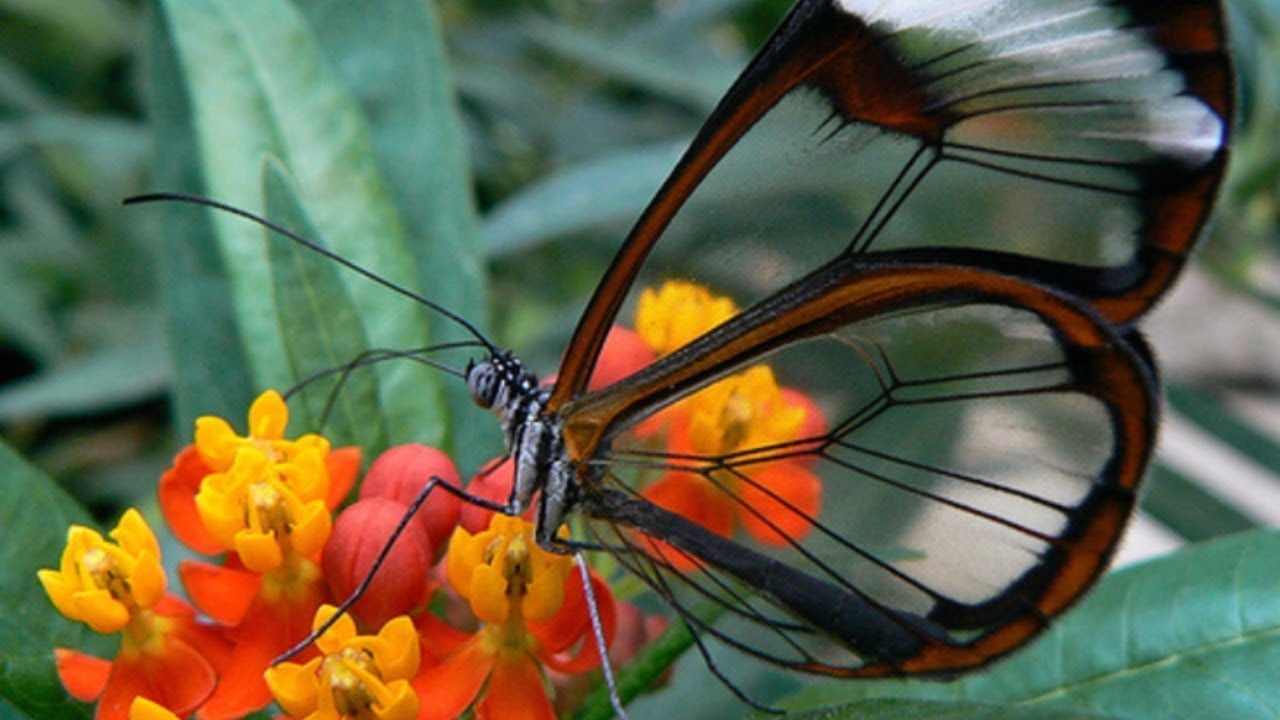 Top 10 Beautiful Butterflies In The World