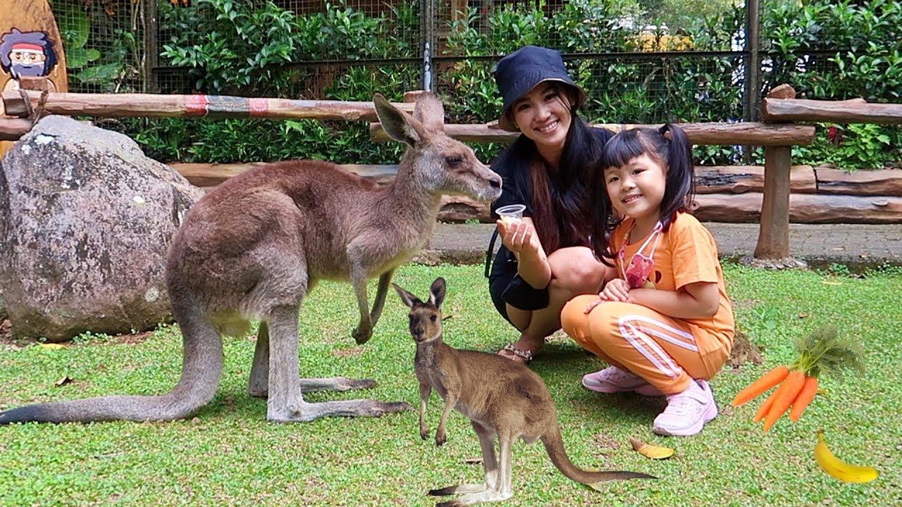 Download Kasih Makan Kanguru Lucu, Kuda Nil dan Bison - Mengenal Binatang untuk Anak Anak
