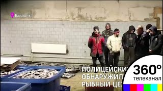 Полицейские Балашихи накрыли незаконный рыбный цех