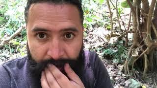 Buscando duendes reales en lo más profundo del bosque! (Video sin efectos)
