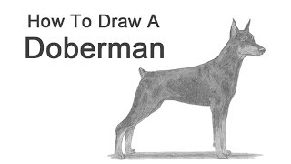 How To Draw A Dog (doberman Pinscher)
