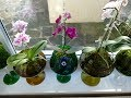 How to Style an Orchid Plant Retro Glass Vases Orchids Update Green Moss