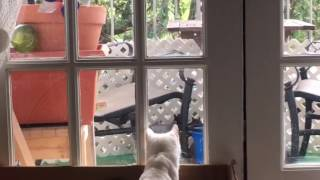 Cats Watching Squirrels