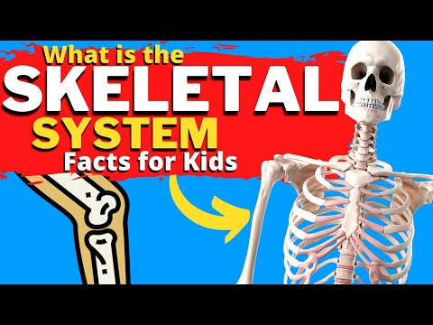 What is the SKELETAL System? | How Do Bones Work? | Facts for Kids
