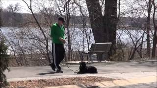 Kodiak (border Collie) Boot Camp Dog Training
