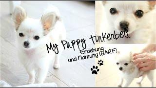 Mein Hund Tinkerbell | Erziehung, Ernährung & Tipps