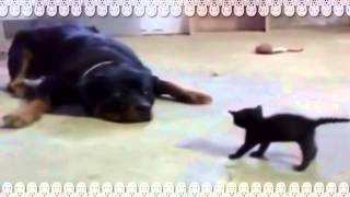 大きな犬と小さな子猫ちゃんのかわいいケンカの様子。 爆笑注意なので電...