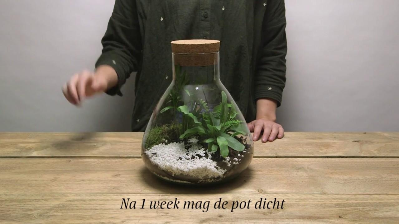 Grote Kamerplanten Intratuin.Intratuin Planten Terrarium Maken Diy Youtube