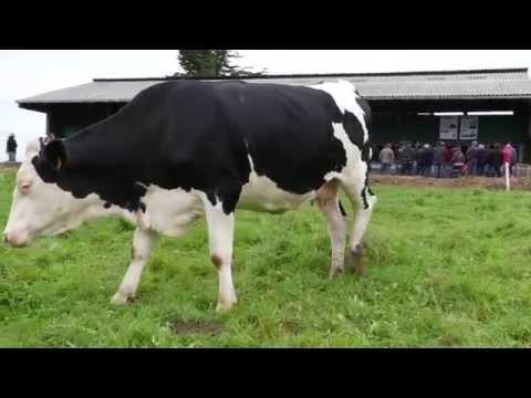 EPAB / GAB, journée filière lait bio