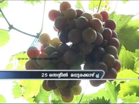 Beautiful Grape Farm in Nedumangad, Thiruvananthapuram