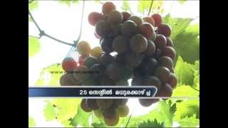 Beautiful Grape Farm in Nedumangad, Thiruvananthapuram