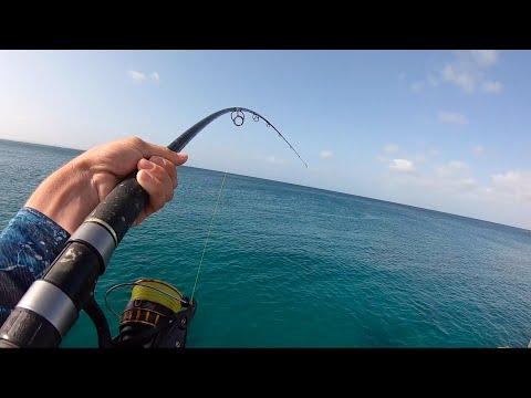 Pier Fishing | Squid & Rays