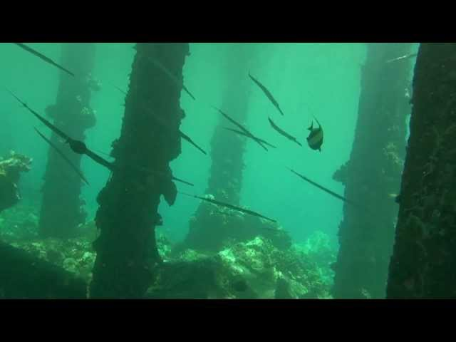 Maui Dive Sites - Mala Wharf